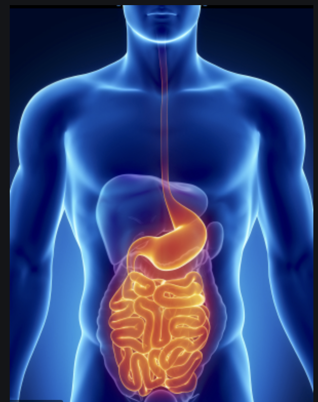 Digestion: The Great Secret of Life 4