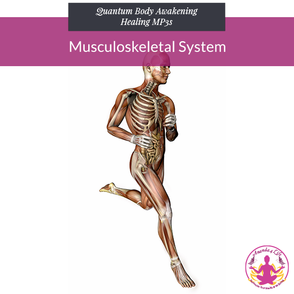 Musculoskeletal System 1